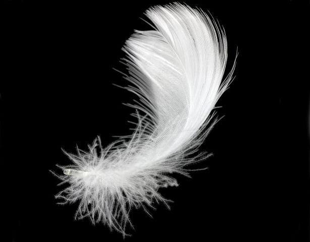 down feather